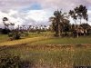 kamb1996_waibel_siam_reap_rice_fields