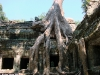 kamb2009_waibel_ta_prohm_roots_02