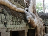 kamb2009_waibel_ta_prohm_roots_04